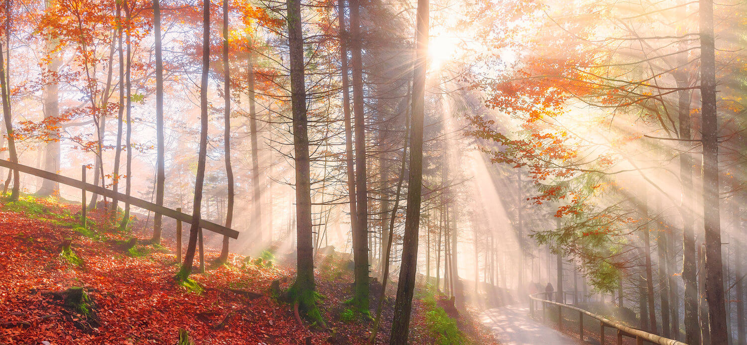 Forest Path and Sunlight